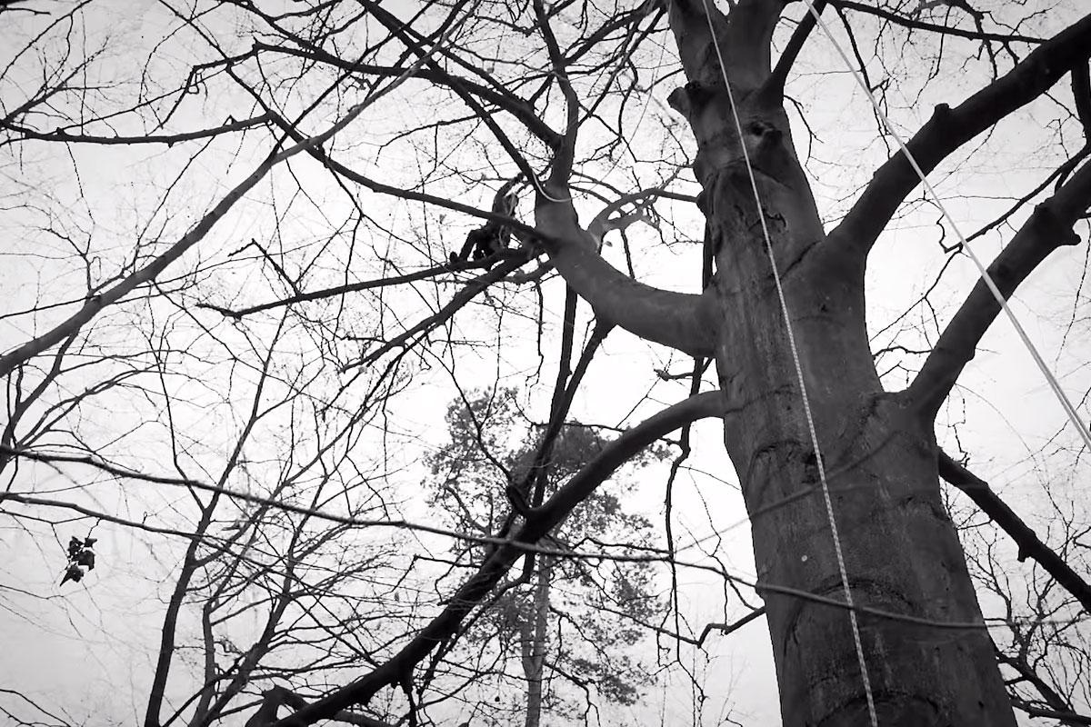 Im Regenwald über Bäume wandern