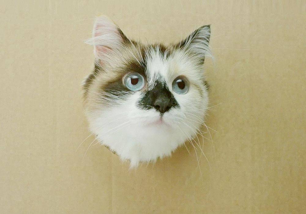 Ein Katzen-Discount mit Markenvielfalt