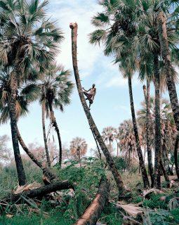 Palmwein Sammler Kyle Weeks