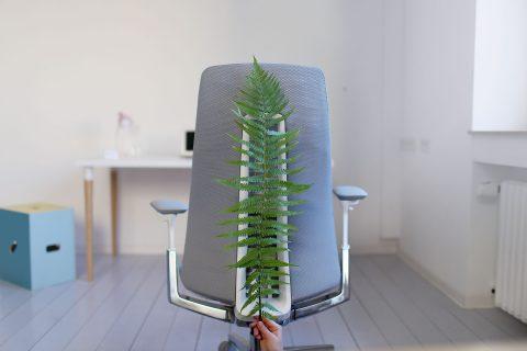 Die Biologie eines ergonomischen Bürostuhls – wie Fern das Sitzen evolutioniert