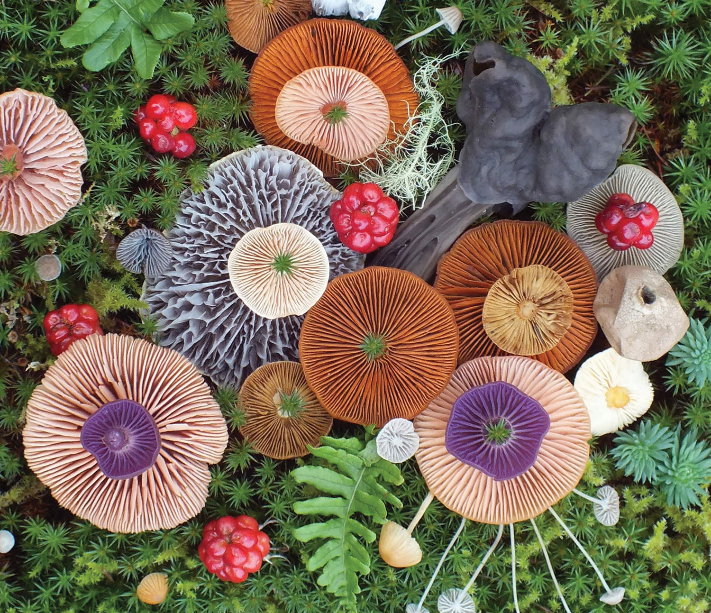 Magical Mushroom Medley #2