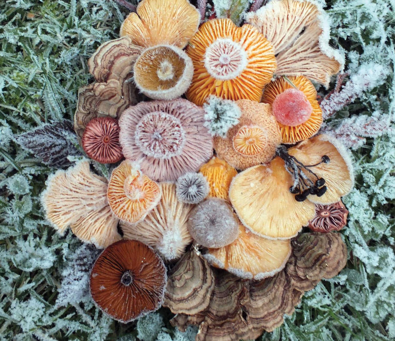 Magical Mushroom Medley #4