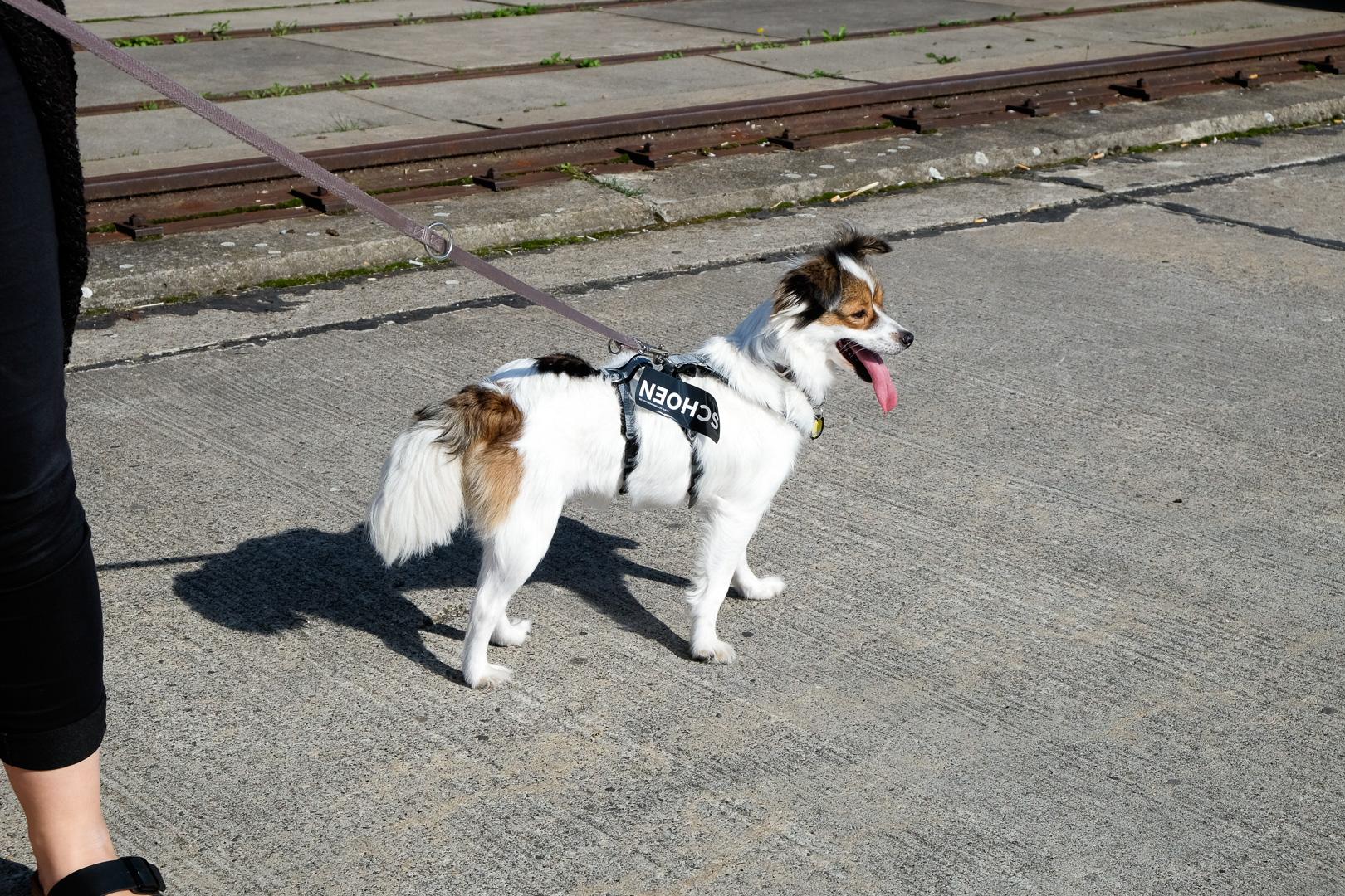Hund Yaska