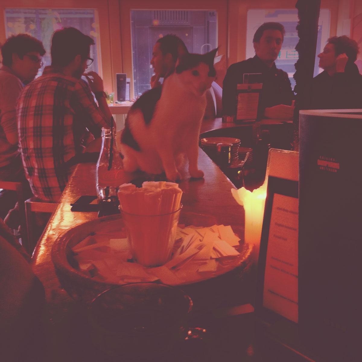 Coffee Shops Amsterdam