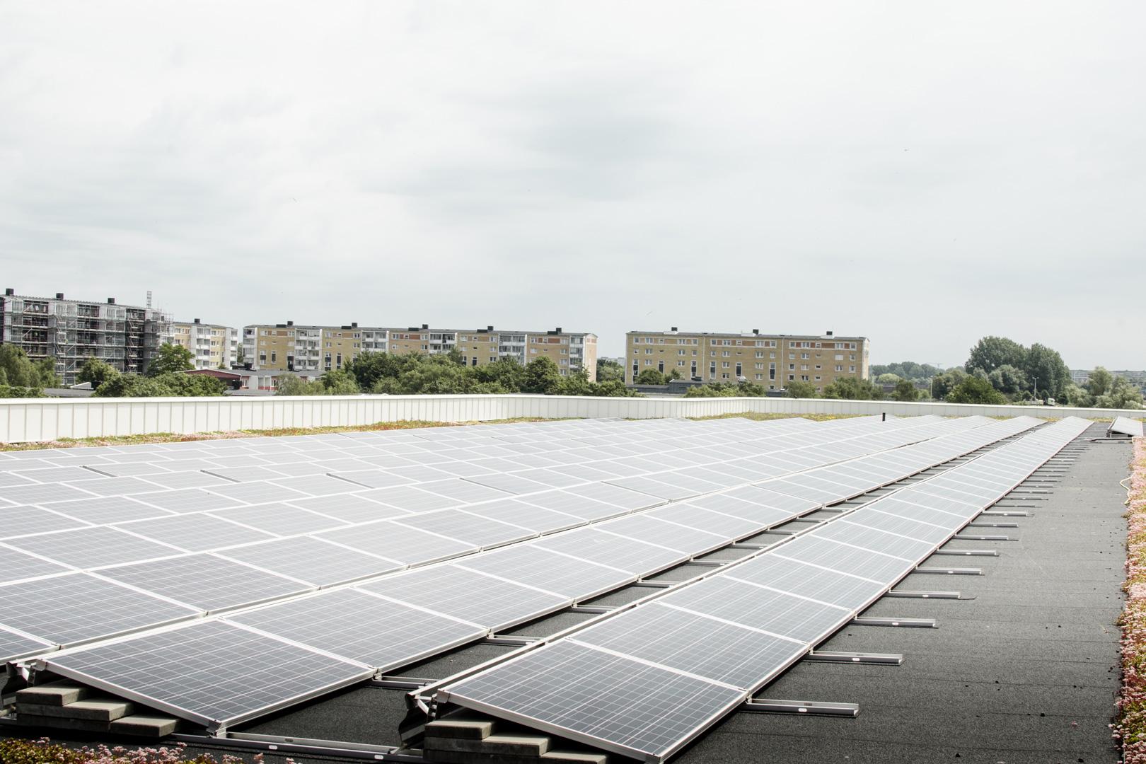 Feld aus Solarpanels