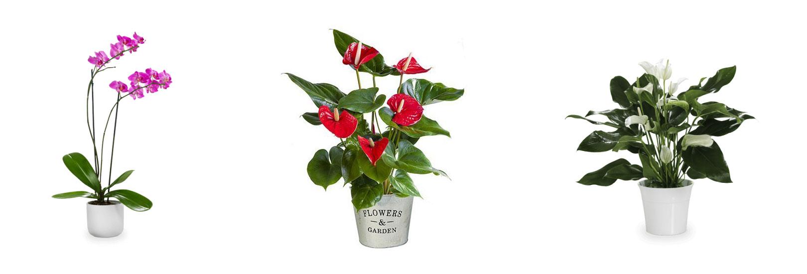 Weltweiter Blumenversand für einen besonderen Menschen in der Ferne